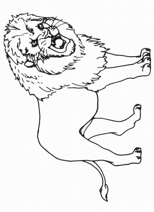 Раскраски лев - 4