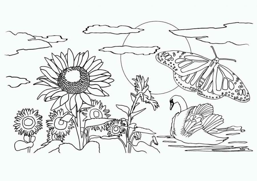 обои для живые организмы природы картинки-раскраски для 1 класса только завтрак (шведский