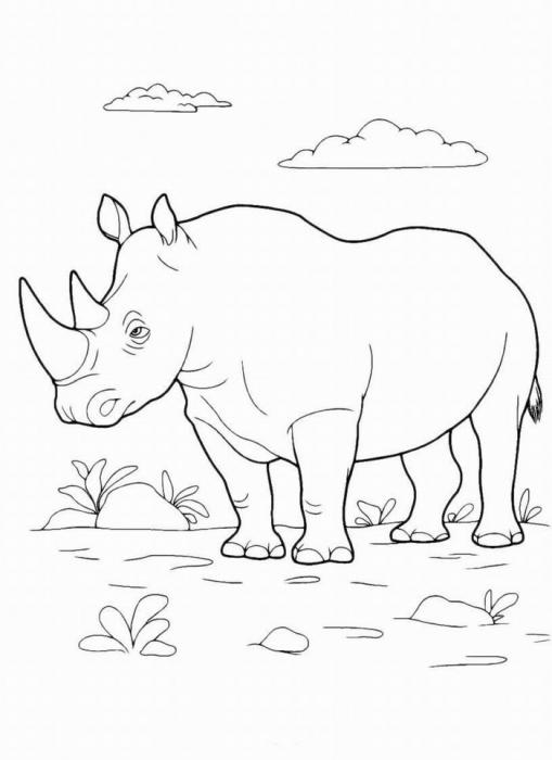 раскраска носорог раскраску рф распечатать и скачать