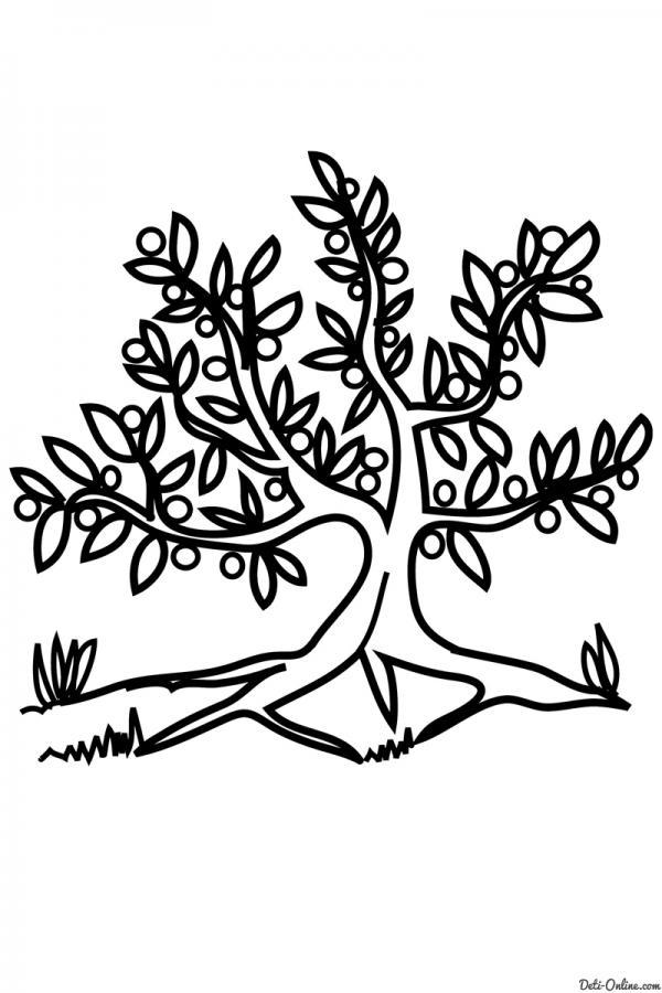 Раскраска Оливковое дерево   РАСКРАСКУ .РФ - распечатать и ...