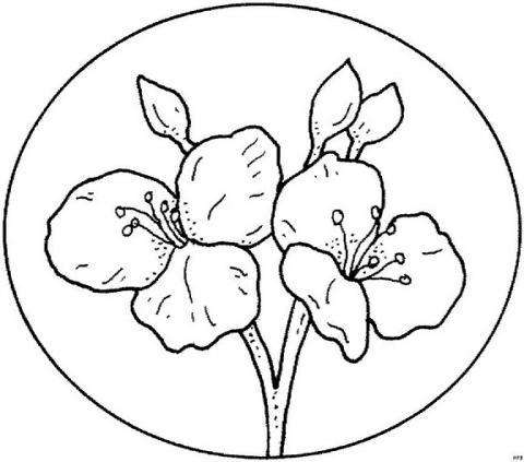 Раскраска тарелка с цветами