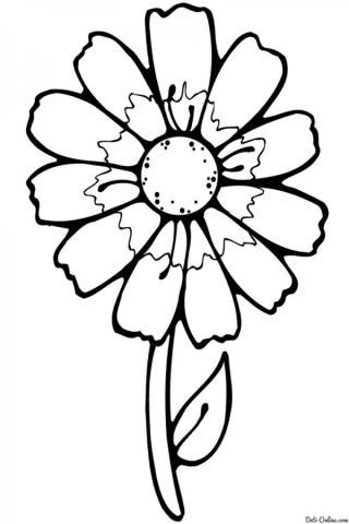 Раскраска Простая ромашка