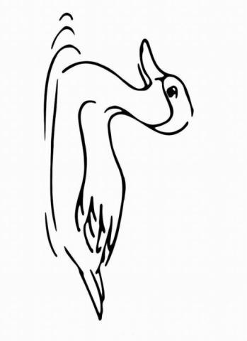 Раскраска утка