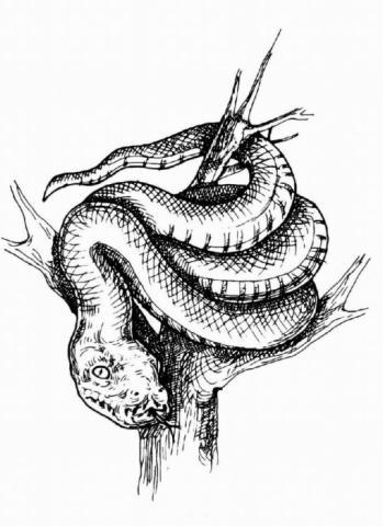 """Раскраска """"Змея"""""""