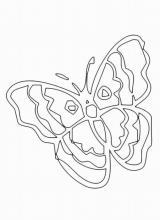 Раскраска бабочка