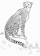 Раскраска Леопард