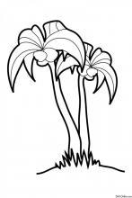 Раскраска Пальма