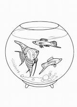 Раскраска Рыбы