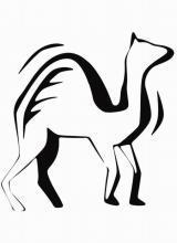 """Раскраска """"Верблюд"""""""