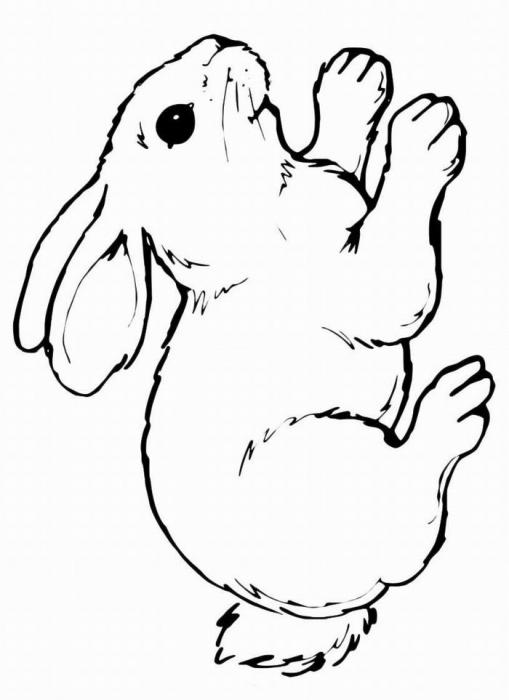 раскраска заяц 2 раскраску рф распечатать и скачать